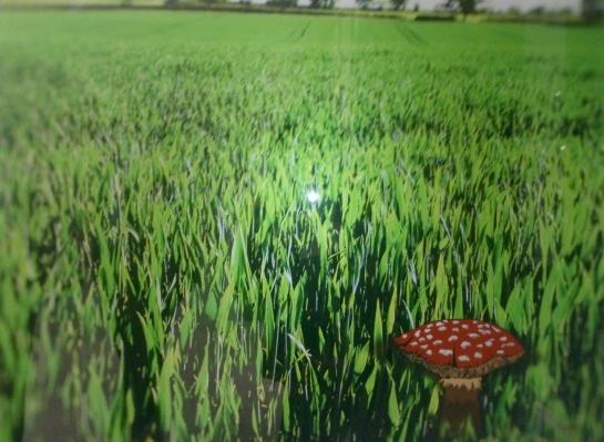 Mushrooms...mmm - Damla Tokcan Faro